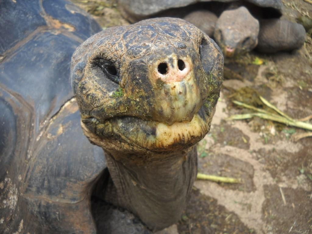Jacobs Galapagos