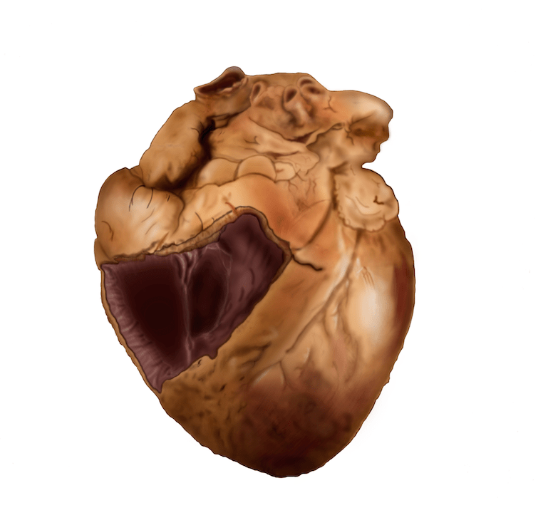 Heart Illustration Rooprai