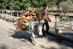 A donkey as a local transport