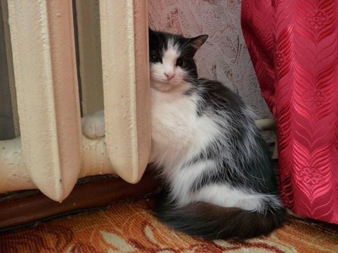 Кошки на батарее (24)