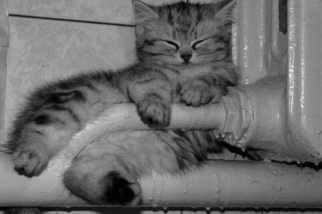 Кошки на батарее (2)