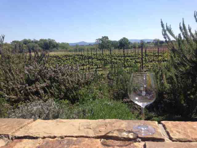 Vegetarian Travel: Sonoma Valley