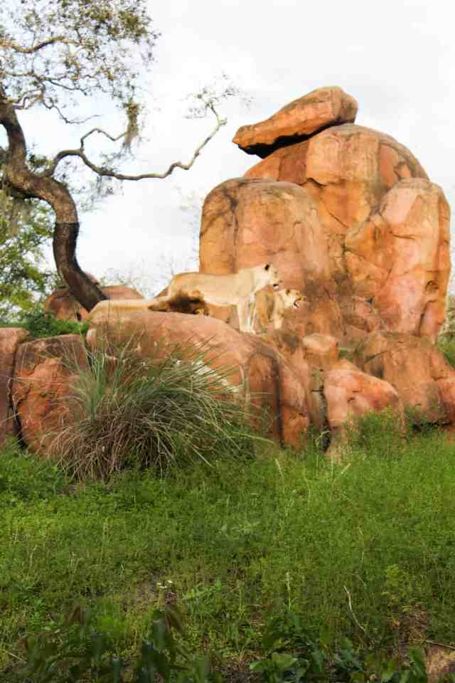 Vegetarian Travel: Disney World // pumpkinandpeanutbutter.com