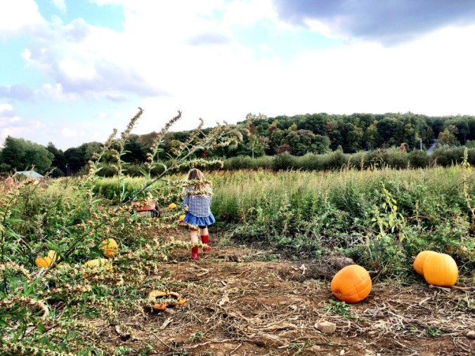 pumpkin picking 14