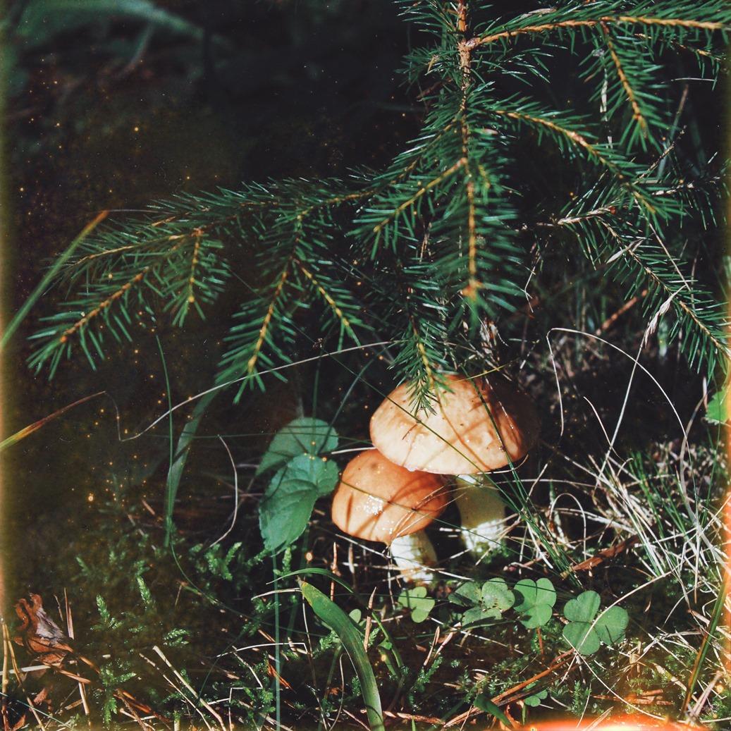 Лесные сокровища