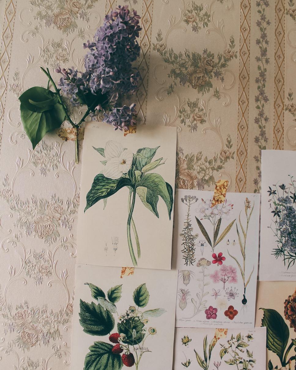 Прикосновение зелени. Ботанические распечатки