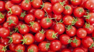 Image result for Erisco, Asian firms plan tomato factory in Katsina