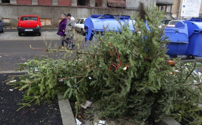 Salubritatea Craiova: Brazii de Crăciun, colectați sâmbătă de la platforme în vederea reciclării