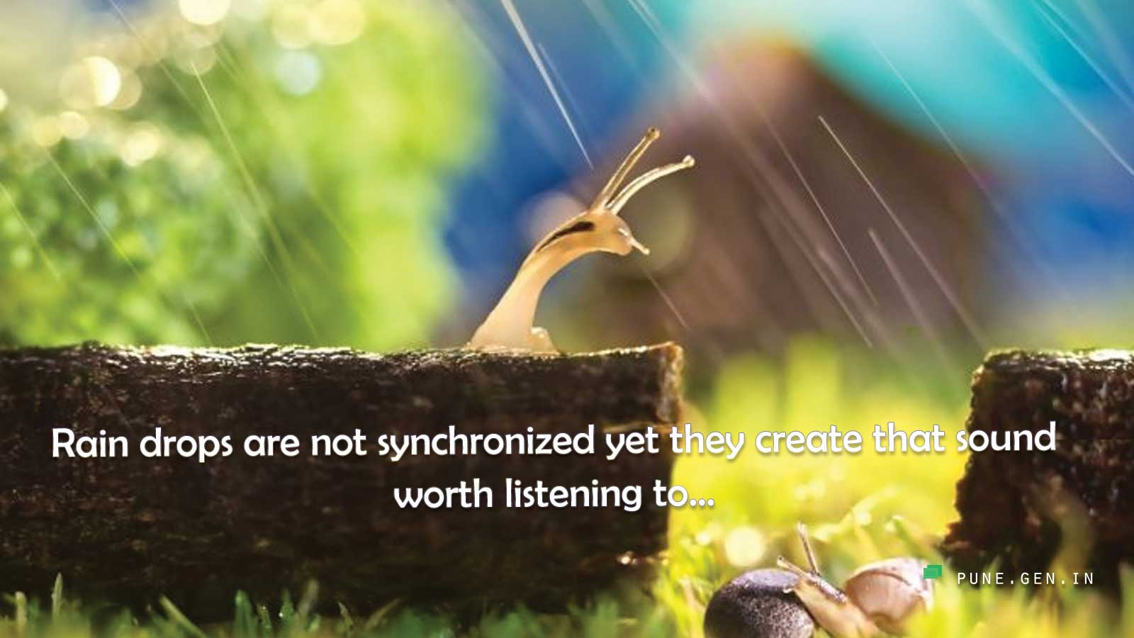 Nature Quotes: Rain drops are not synchronized…