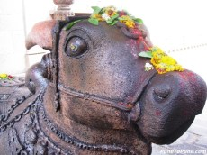 Nandi (the closeup)