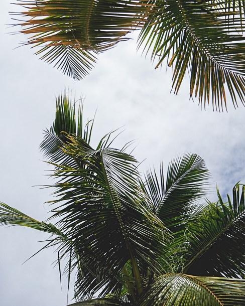 a-palms