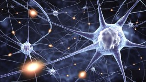 Did you know your brain is always changing? Neuroplasticity
