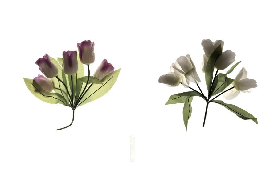 Gábor Gerhes: Herbarium, 2018–2019, (Atlas).