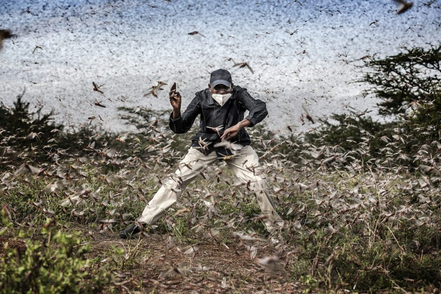 Fotó: <b>Luis Tato</b>: <i>Locust Invasion in East Africa</i><br> © Luis Tato, Spain, Winner, Professional, Wildlife & Nature, 2021 Sony World Photography Awards