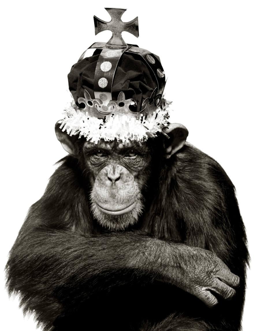 Fotó: Albert Watson: Monkey with Crown (King Casey) 142 x 107 cm Archival Pigment Print © Albert Watson / Courtesy of CAMERA WORK