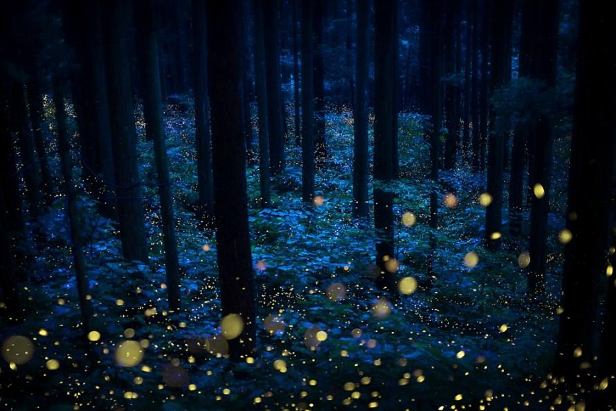 Fotó: Kazuaki Koseki: Részlet a Nyári tündérek (Szentjánosbogarak) című sorozatból © Kazuaki Koseki