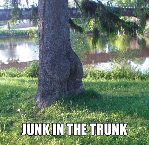 junk in trunk tree looks like bum, pun