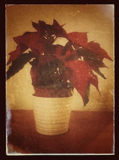 Resultado final efecto fotografía vintage con la aplicación Snapseed
