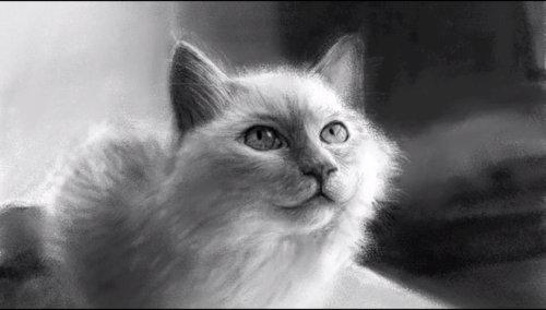 Dibujando-un-Gato-en-iPad-usando-Bloc-de-Dibujo-por-Kyle-Lambert