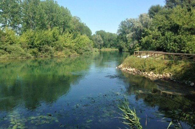 Lungo la ciclopista del sile con le sue piante e la sua acqua verde
