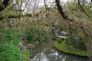 fronde degli alberi che si specchiano nel laghetto