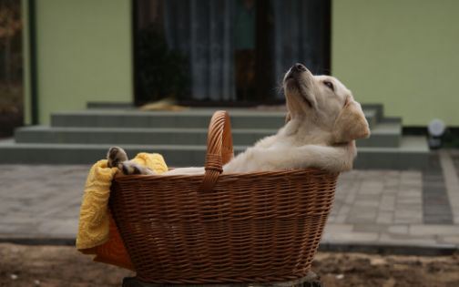 Relax anche per i cuccioli