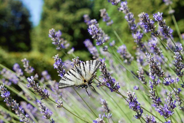 Farfalla in visita al giardino vegetazionale astego