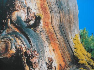 """""""L'anima del bosco. Uomini e foreste in Lombardia"""" - visita fotografica di Punto.Ponte 15"""