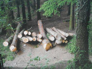 """""""L'anima del bosco. Uomini e foreste in Lombardia"""" - visita fotografica di Punto.Ponte 18"""