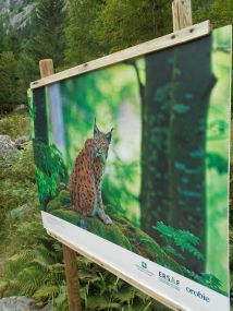 """""""L'anima del bosco. Uomini e foreste in Lombardia"""" - visita fotografica di Punto.Ponte 3"""