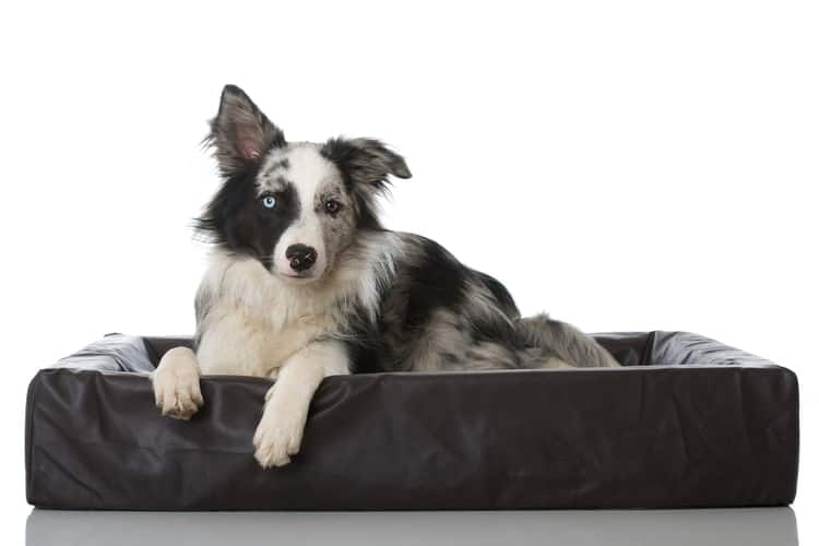 the 25 best chew proof dog beds of 2020