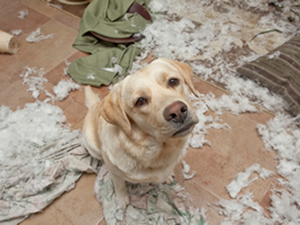 puppy_destruction