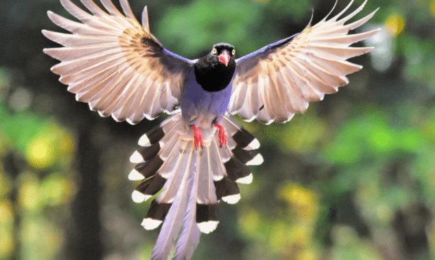 Birds That Are Notorious For Snatching Small Dogs