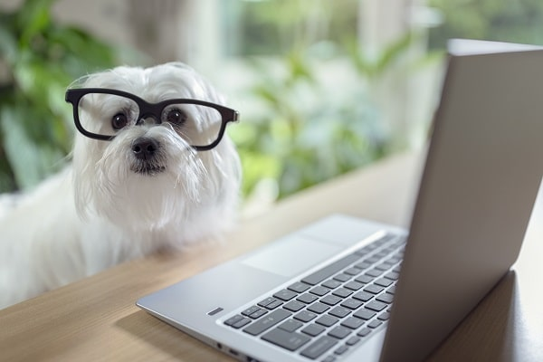 Top Working Dog Breeds