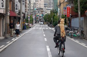 city-dog-riding-bike