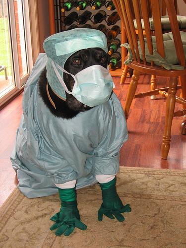 doctor-dog1
