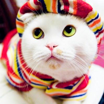 Cat photo by swanky