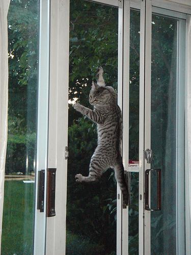 Cat photo by flickr.com/photos/archangeli