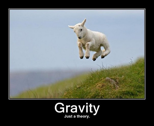 Goat kid jumping and defying gravity