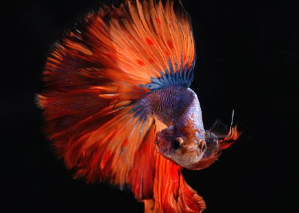 Alimentación para los peces