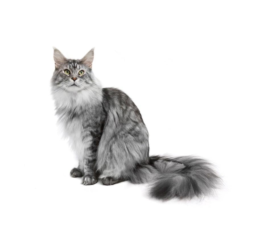 mi primer gato