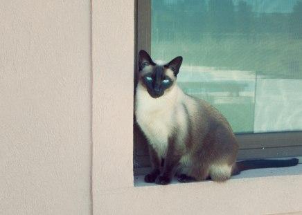 Obesidad en gatos: por más lindo que se vea, no es un gato feliz