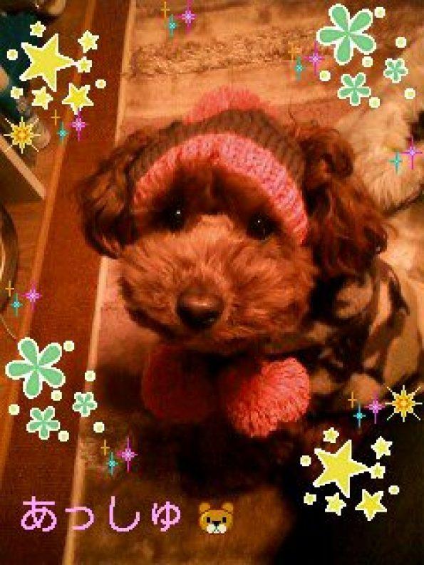 少し前のなんですが、ニット帽かぶってパチリ☆私のお気に入りで、携帯の待ち受けになってます (親ばか(笑))