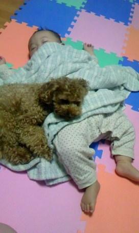 こんにちは~。 アッシュ、3月3日に3才になりました。早いですねー。 まだまだ、やきもちが凄い時もあるけど、最近は、たま~に寄り添って寝ることがあります。とっても可愛くて、母はキュンキュンです。