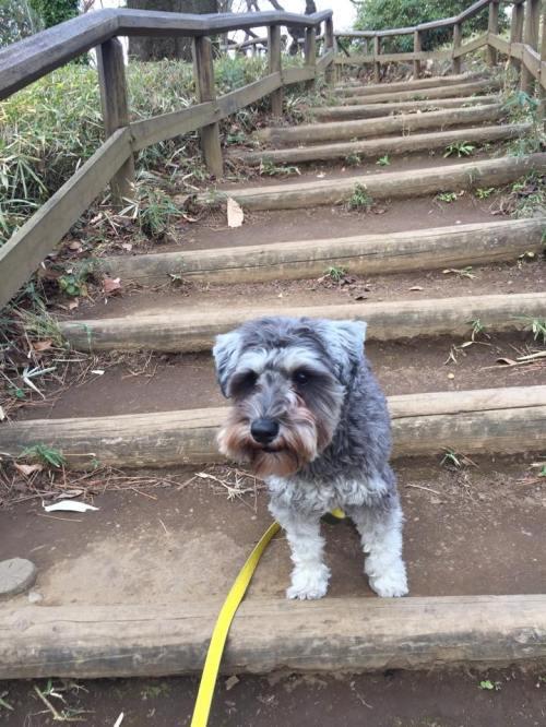 お散歩中の公園で、早く行こう!とわたしを誘うポルトをパチリ。 わんちゃんにとって芝や土の感触も楽しみのひとつです。 お時間のある時に、近くの自然を探してみませんか(o^^o)