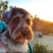 トリミング塾の帰りに庭園で夕陽を見るポルトをパチリ。 なんだか久しぶりに夕日を見たような気がしますが、とてもきれいでした♪