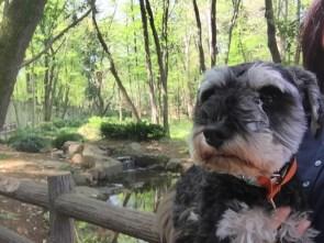 今日は緑豊かな森へ遠足に来ました♪