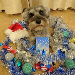 メリークリスマスなポルトをパチリ。 プレゼントはポルトの胸元にあるクリスマスカードとプレゼント目録です(*^^*) ポルト待っててね。