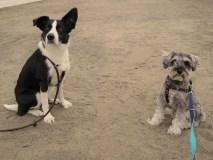 海の公園のお散歩で、偶然会ったルティちゃんとパチリ。 今日は暖かかったので、わんちゃんも人もたくさんいました(*^-^*)ポルトは恒例になりつつある、浜辺でダッシュ!も満喫しました♪