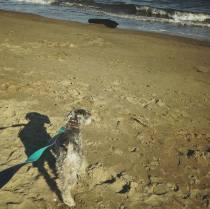 週末のお決まり散歩、浜辺でパチリ。今日もたくさん遊んだそうです。 今週のポルトはお留守番が多かったのでリフレッシュしてくれたかな(^-^)